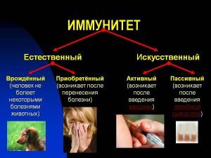0010-010-Immunitet