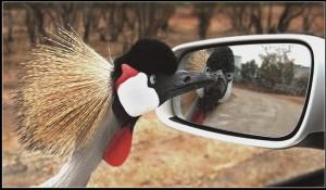 птичка и зеркало